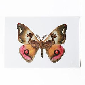ArtPrint mariposas de Chile